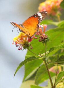 butterfly_Fotor